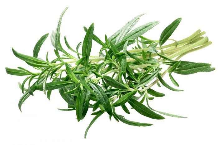 گیاهی که شستشو دهنده کلیه و مجاری ادراری است